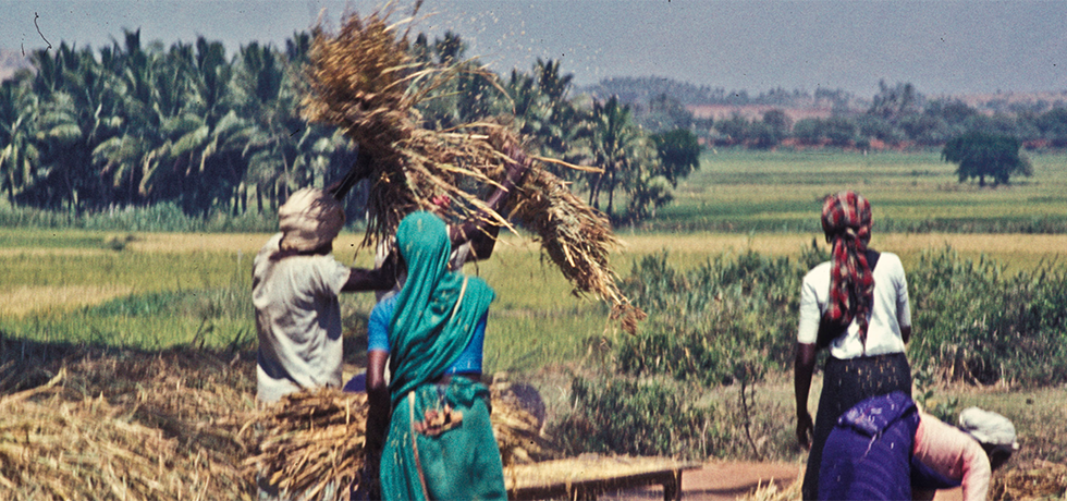 india is a country of farmers Many punjab farmers who went to africa and georgia in search of  to allow  indian farmers to take land on lease in the for farming african.