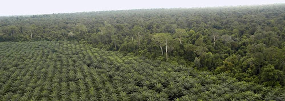 plm oil plantation-wrm