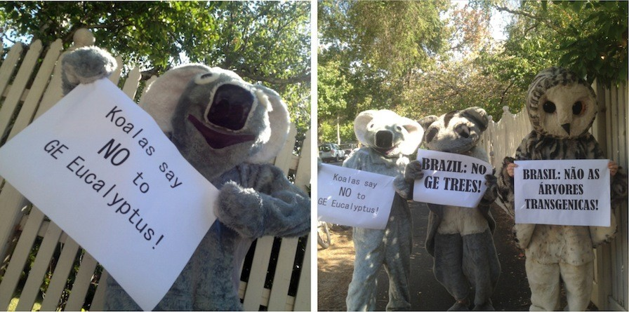 slider koala